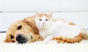 cat litter on carpet